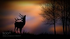 autumn evening by costelbcc. @go4fotos