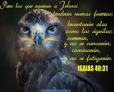 ISAÍAS 40:31 http://siembracr.wixsite.com/siembracr