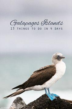 13 things to do in Galapagos - Santa Cruz and Isabel islands