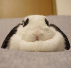 Looks just like my first bunny snuggles. So cute!