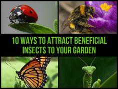 10 Ways To Attract Beneficial Insects To Your Garden