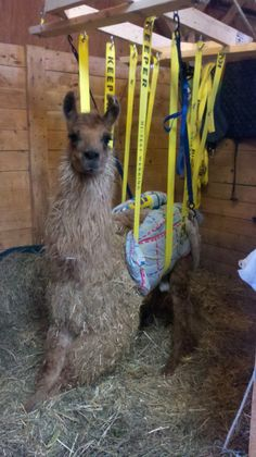 FarmLife: Thoughts On Animals, Stewardship, & Farm Culture Llamas, Denise Richards, Physical Therapy, Conference, Goats, Lisa, Join, Birds, Animals