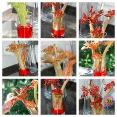 celery capillary action