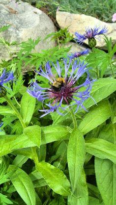 Flr-bee