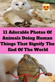 11 Adorable Photos Of Animals Doing Human Things That Signify The End Of The World Days Are Numbered, World 2020, April 10, End Of The World, Civilization, Skateboard, Halloween Horror, Funny Humor, Halloween Decorations