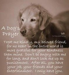 A dogs prayer