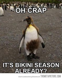 Check out: Animal Memes - Oh crap! One of our funny daily memes selection. We add new funny memes everyday! Bookmark us today and enjoy some slapstick entertainment! Lol, Haha Funny, Funny Cute, Funny Stuff, That's Hilarious, Funny Things, Happy Things, Hilarious Sayings, Penguins