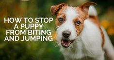 stop puppy biting & jumping (1)