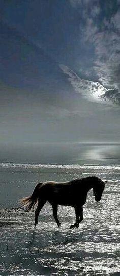 BLUE SKIES AHEAD AND BEAUTIFUL OCEAN EVERYWHERE