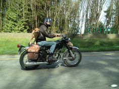 WA Motorcyclist Ticketed for dog Endangerment