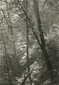 Stags Moat (Study of Trees) by Josef Sudek