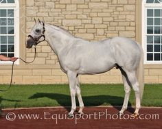 Alphabet Soup sired 16% stakes winners from foals in his first crop and 11% stakes winners in his second crop