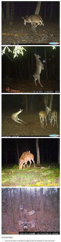 Look at the second picture down from the top. The deer is interacting with an orb (Spiritual Energy)