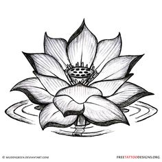 Black lotus tattoo design The lotus is the symbol of absolute purity; it grows from the dark watery mire but is untainted or unstained by it. It is a common symbol in Tibetan art that represents purity and compassion, perfection and renunciation. Buds are a symbol of potential, of growth, and of the future, and flowers are a universal symbol of love, compassion and beauty.