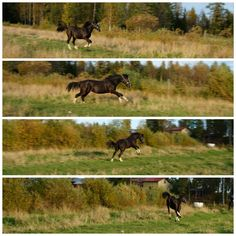 autumn fun at the stable #foal #filly #pony #speed #autumn #finland