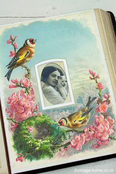 Vintage Home Shop - Victorian Full Colour Chromoliths Birds Album - Building the Nest in March - www.vintage-home.co.uk
