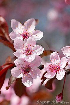 Estas flores son del amor si tienes novio te las regalara será por que te ama