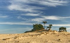 National Park De Hoge Veluwe is one of Holland's largest National Parks. You can explore the park on one of its free-to-use white bikes. Nature Pictures, Cool Pictures, Holland, Europa Tour, Day Trips, Netherlands, Natural Beauty, Tourism, Clouds