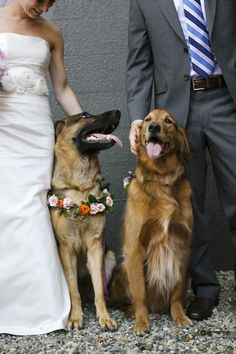 Dogs at Wedding   photography by http://www.firstcomeslovephoto.com/
