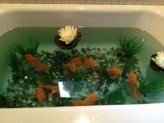 "Our creative idea: a ""pond"" in our unused bathtub!"