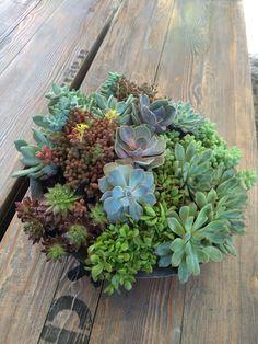 MY 1st succulent dish garden!
