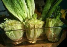 7 verdure che possiamo coltivare in casa a partire dagli scarti (e non solo)   Ambiente Bio   Bloglovin'