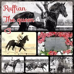 RUFFIAN All The Pretty Horses, Beautiful Horses, Sport Of Kings, Thoroughbred Horse, Racehorse, Courses, Horse Racing, Beautiful Creatures, Dog Breeds