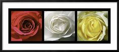 https://www.art.com/products/p12341808-sa-i1723349/laurent-pinsard-roses.htm?upi=F13MF60