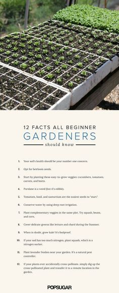 12 Intriguing Facts All Beginner Gardeners Should Know