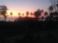 Coconut Palms are everywhere .. Eratap, Vanuatu