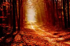 Beautiful forest by ~pAnAi5 on deviantART