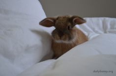 Bunny Explores the Hilly Fluffiness of the Duvet