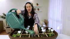 Como realizar a Irrigação da sua Horta