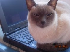 The BriBri was intellectual. Was always on the computer. Lizzie cat.
