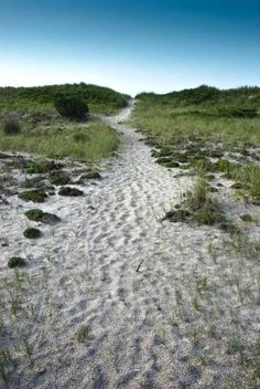 Fire Island National Seashore, Fire Island, New York - Otis Pike Fire Island High Dune Wilderness, located on the eastern end of Fire Island, is the only federally designated U.S. Wilderness Area in New York State.