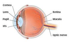 What Is Trichiasis? - Eye M.D.-approved information from EyeSmart