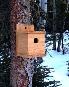Birds are beneficial for your garden. All you have to do is use these free DIY bird house plans and bird feeder to build one, and they will come. #birdhousekits