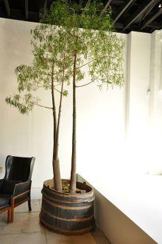 In oude ton. Kunstboom