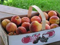 A basketful of peaches