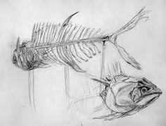 Image result for fish drawing in pencil