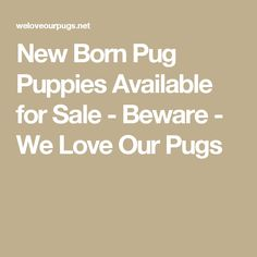 New Born Pug Puppies Available for Sale - Beware - We Love Our Pugs