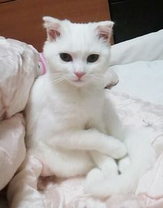 """Almost looks like our """"Luna"""" but Luna has big pink ears and looks like a mouse..LOL!!"""