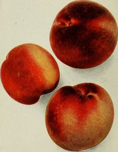 "Image from page 123 of ""Biggle orchard book : fruit and orchard gleanings from bough to basket : gathered and packed into book form"" (1906) 