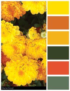 Yellow Flowers Color Scheme #colorscheme