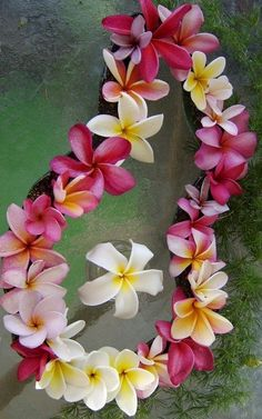 So easy to plant---and there are so many varieties. These plumeria flowers make lovely leis, and are a staple in many yards in Hawaii. Leis are always given with a kiss. Exotic Flowers, Tropical Flowers, Colorful Flowers, Beautiful Flowers, Purple Flowers, Plumeria Flowers, Hawaiian Flowers, Plumeria Care, Lilies Flowers