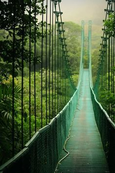 .............................................................LINE, VALUE .............................................................Suspension bridge in Monteverde National Park, Costa Rica