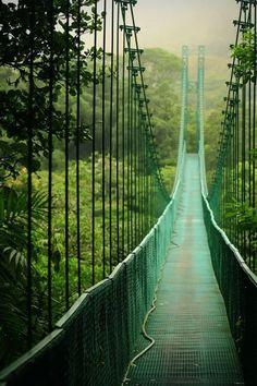 Puente colgante en la selva tropical del Parque Nacional de Mesa Verde, Costa Rica                                                                                                                                                                                 Más