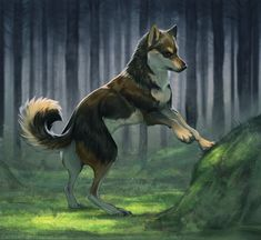 Explorer by ZakraArt on DeviantArt Manga Wolf, Anime Wolf Drawing, Cute Animal Drawings, Animal Sketches, Cool Drawings, Pet Anime, Wolf Artwork, Wolf Spirit Animal, Wolf Illustration