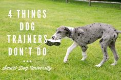 dog trainer, dog training, dog obedience, puppy, puppy training, puppy classes, Frederick, clicker, Smart Dog,
