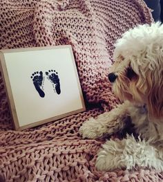 LULU the dog wth baby's prints instone on a pink rug